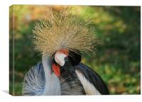 Declining specie: the grey crowned crane, Canvas Print