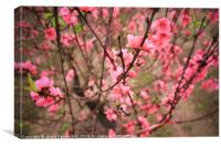Peach Blossom, Canvas Print