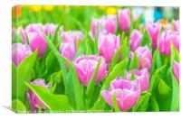 Beautiful tulips in Flower Dome, Singapore, Canvas Print