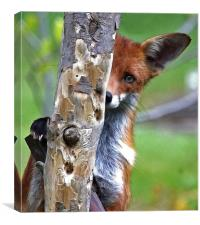 Fox Hide & Seek, Canvas Print