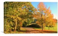Autumn Country Lane in Hampshire , Canvas Print
