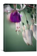 Pretty petals , Canvas Print