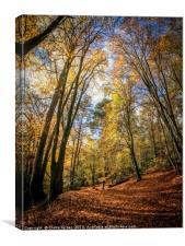 Golden Autumn carpet, Canvas Print