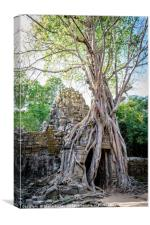 Ta Som tree, Canvas Print