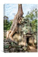 Tree on temple ruins, Canvas Print