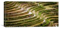 Rice terraces in China, Canvas Print