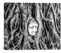 Ayutthaya Buddha head in tree, Canvas Print