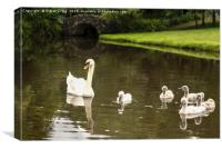 Swans in the Park , Canvas Print