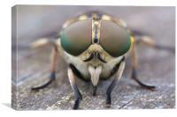 Horsefly macro, Canvas Print
