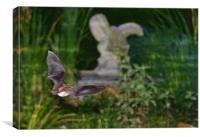 Greater horseshoe bat, Canvas Print