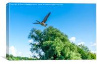 Takeoff, Canvas Print