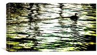Duck on a Gold Lake                      , Canvas Print