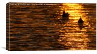 A Lovely Silhouette of Ducks           , Canvas Print