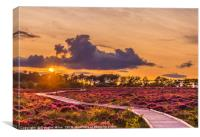 Red Moss Sunset, Canvas Print