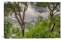 Ben Lui through the trees, Canvas Print