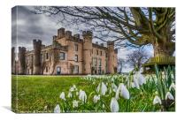 Snowdrops at the House of the Binns, Canvas Print