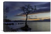The Tree, Milarrochy Bay, Loch Lomond, Canvas Print