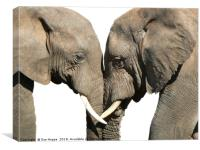 Elephants greeting on white background, Canvas Print
