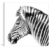 Zebra side view on white, Canvas Print