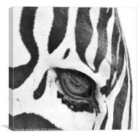 Zebra's Eye, Canvas Print