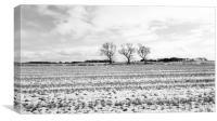 field in ormskirk Lanchasire , Canvas Print