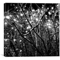 Fairy lights , Canvas Print