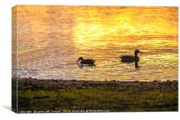 Ducks backlit by a rising sun reflection, Canvas Print
