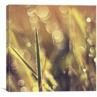 Beauty grass bokeh fantasy photo , Canvas Print
