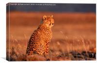 Cheetah Sunset, Canvas Print