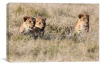 Lion Cubs, Canvas Print