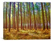 Tree Trunks, Canvas Print