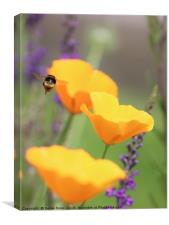 A Bee amongst the Flowers, Canvas Print