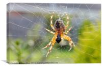 A Spider in its Web, Canvas Print