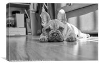 Mylo the French Bulldog, Canvas Print