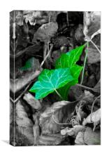 Green Leaves, Canvas Print