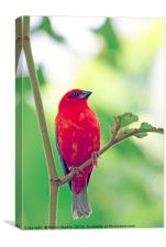 Exotic Red Bird, Canvas Print