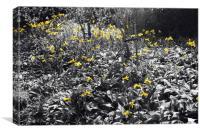 Field of Daffodils, Canvas Print
