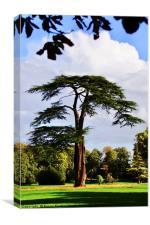 Lydiard Park, Swindon, Wiltshire, Canvas Print