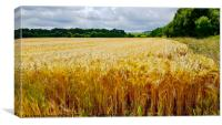 Field of Gold Wheat, Canvas Print