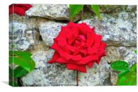 Single Red Rose on Wall, Canvas Print
