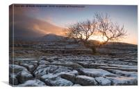 Tree at Twistleton Scar, Yorkshire Dales in winter, Canvas Print