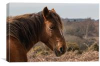 Wildlife image captured in The New Forest #2, Canvas Print