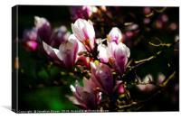 Lytham Blossoms, Canvas Print