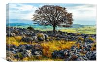 Ash tree and limestone pavement, Canvas Print