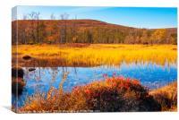 Autumn colours near Saariselkä, Canvas Print
