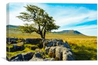 Hawthorn and Ingleborough, Canvas Print