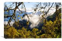 Cloud forest 2, Madeira, Canvas Print