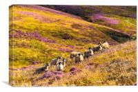 Sheep above Wyresdale, Canvas Print