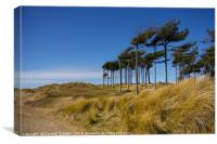 Wind swept trees at Formby Beach, Canvas Print