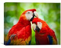 Scarlet Macaws , Canvas Print